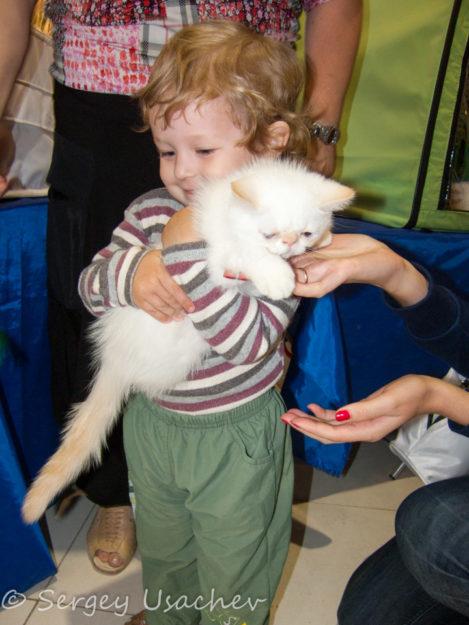 Выставка кошек в Казани
