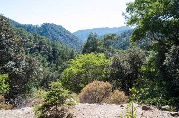 Пафосский лес