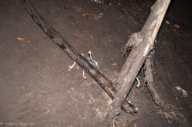 Грибы в пещере Колобок