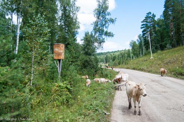 По дороге к Шульган-Таш - Заказник Алтын Солок