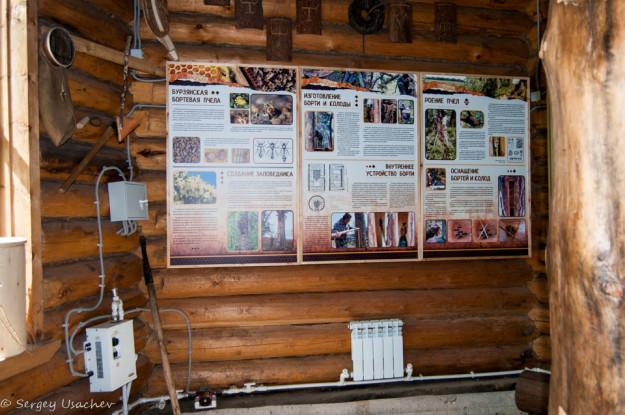 В музее бортевой пчелы в заповеднике Шульган-Таш