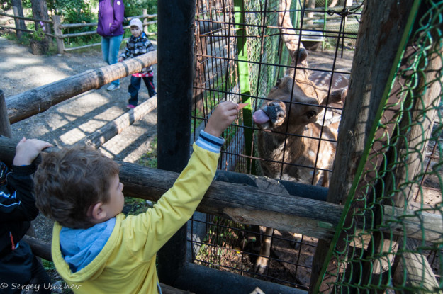 Покормили обитателей зоопарка «Абзаково»