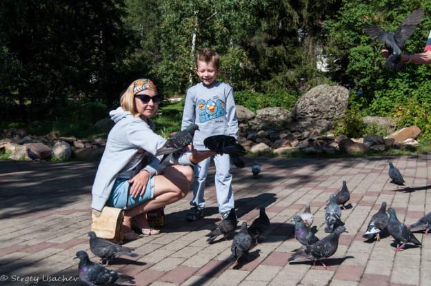 Ручные голуби в Абзаково