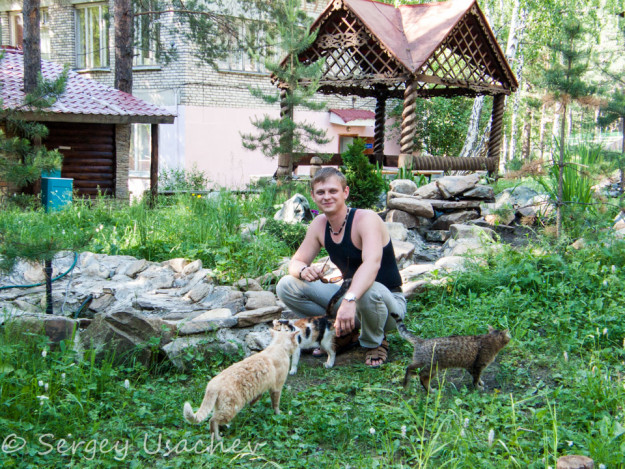 Сбор местных котов