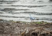 Небольшой шторм на озере Кандрыкуль