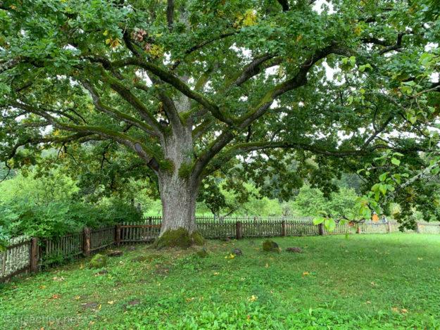 У лукоморья дуб зелёный ...