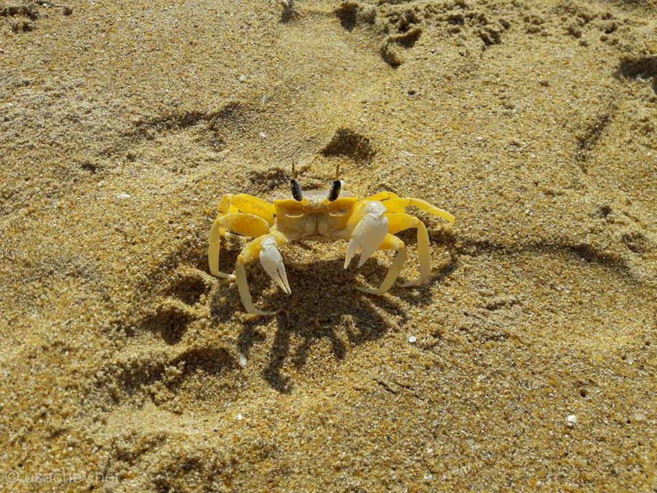 Живность пляжа Унаватуна (Unawatuna Beach)