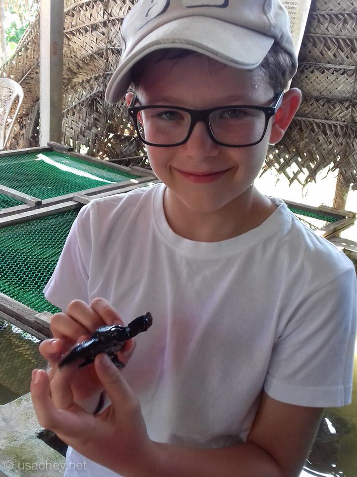 На черепашьей ферме (Koggala Turtle Farm)