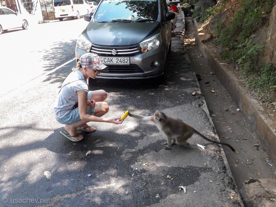 Будьте осторожны с обезьянами у водопада Равана