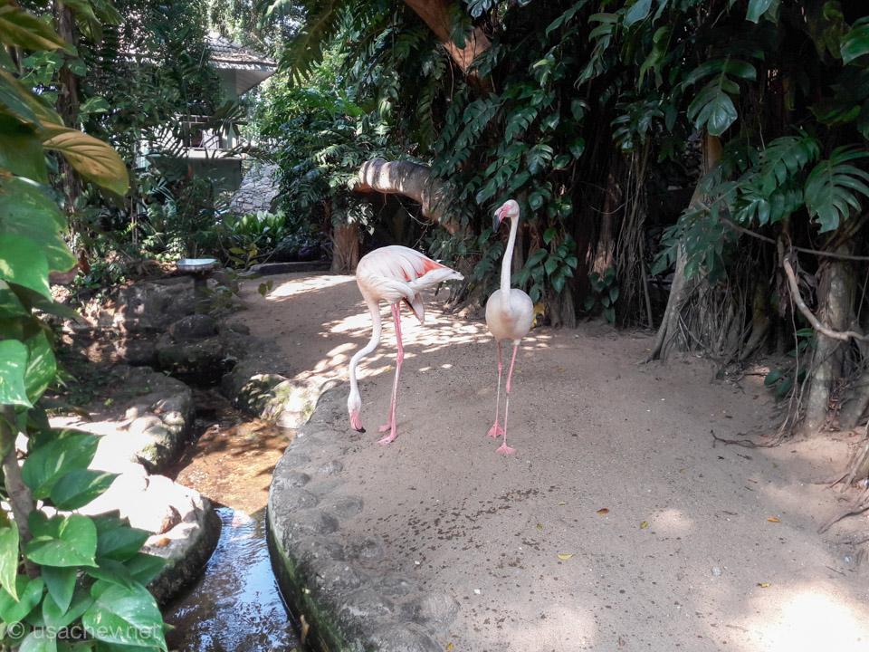Розовый фламинго в Зоопарке Коломбо