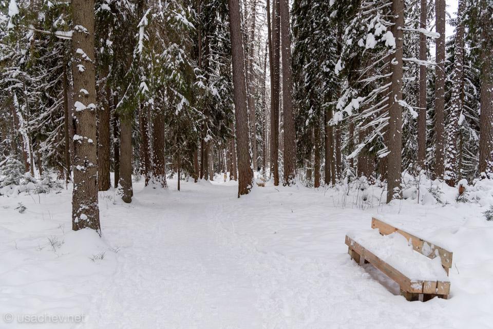 Даже глубоко в лесу есть где отдохнуть