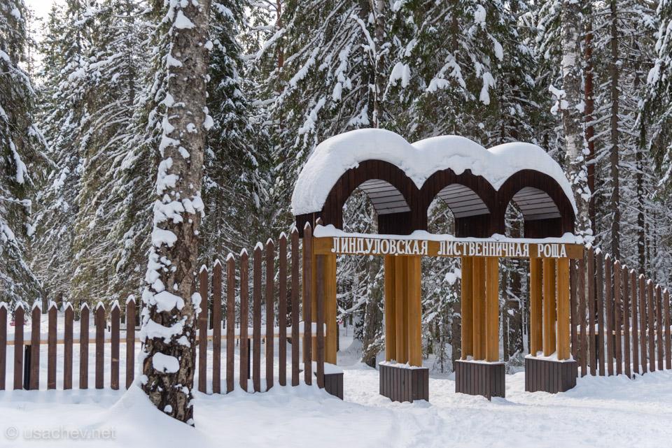 Линдуловская лиственничная роща зимой
